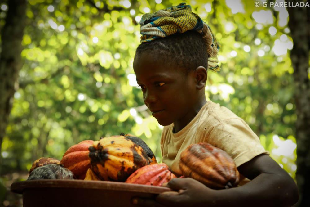 Cocoa Ivory Coast Parellada-3