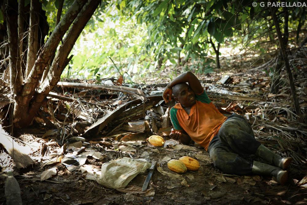 Cocoa Ivory Coast Parellada-4