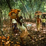 Cocoa Ivory Coast Parellada-5