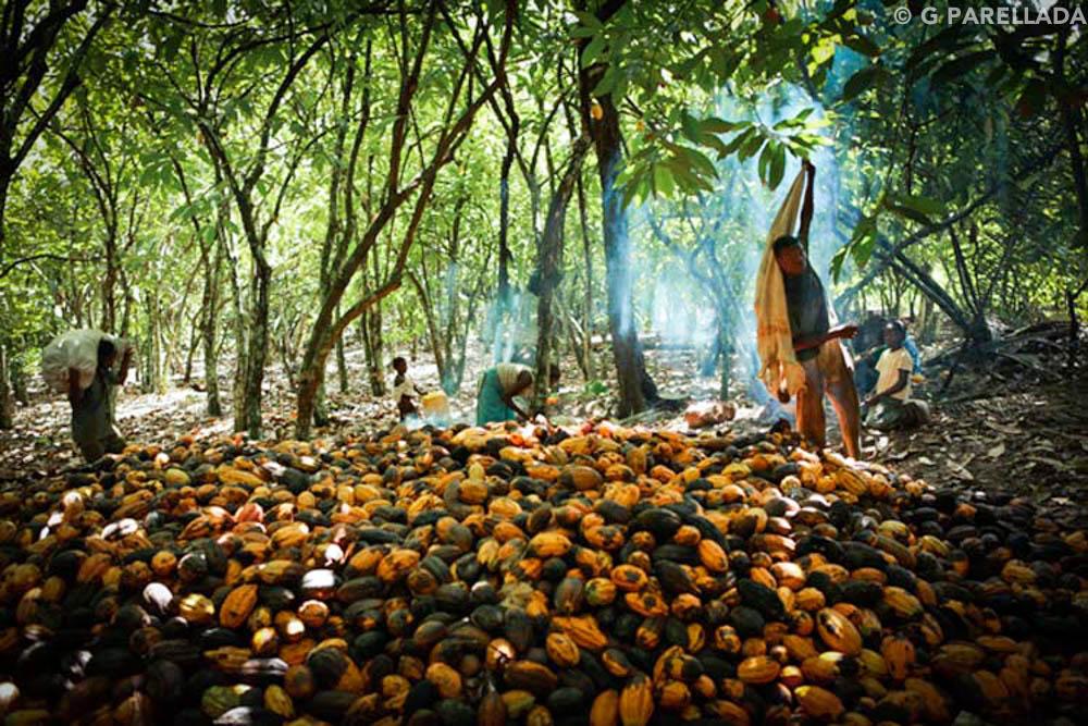 Costa de Marfil, el manantial del cacao